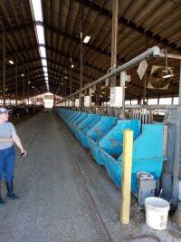 De eetruimte per koe moet minimaal 60-65 cm breed zijn.